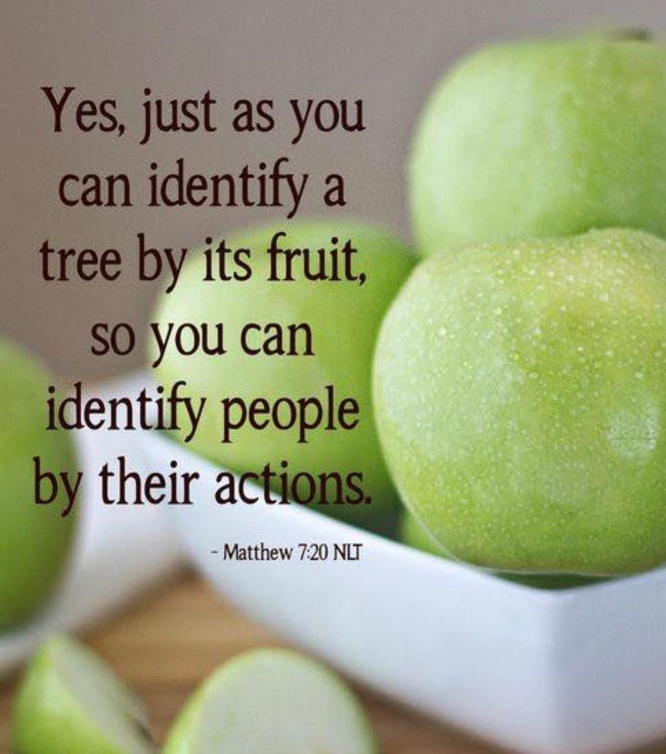 Matthew 7:20 - You can tell a tree by the fruit it bears, not ...