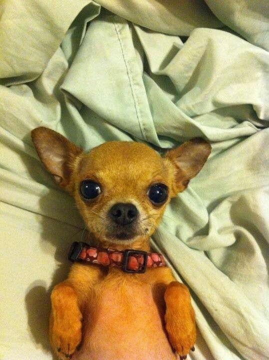Aww SO adorable!!!
