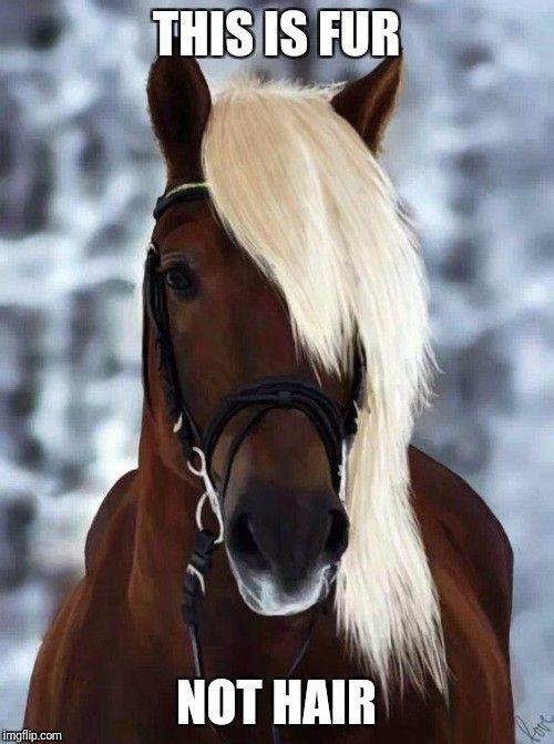 beautiful horse equines horses animals animals beautiful