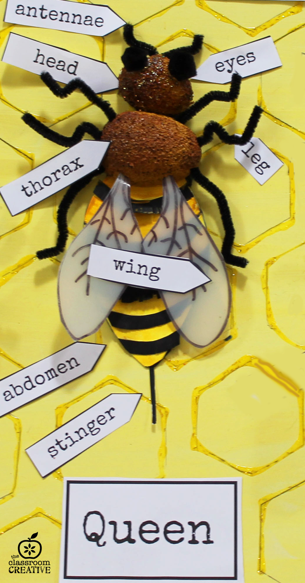 Queen Bee Craft Game Who Can Correctly Label Each Part Of The Bee In 60 Seconds Wins