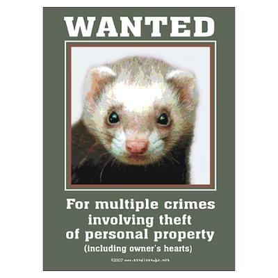 Ferret Wanted By Rebeccakorpita Funny Ferrets Ferret Cute Ferrets