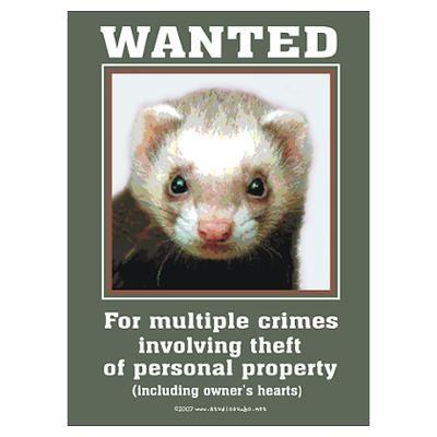Ferret Wanted By Rebeccakorpita Funny Ferrets Ferret Cute Ferrets