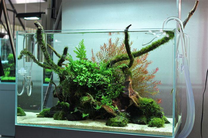 Nice Design | Planted Aquaria Inspiration | Pinterest | Nice Designs,  Aquariums And Planted Aquarium