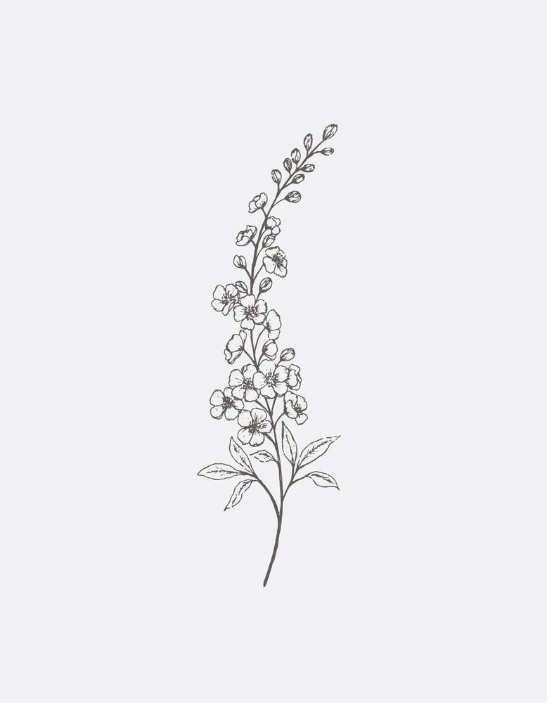 Delphinium Line Art Art Print By Gooseberry Moon X Small Lilac Tattoo Larkspur Flower Tattoos Delphinium Tattoo