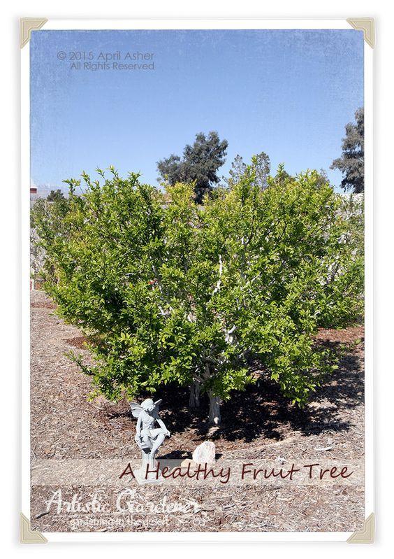 Planting Fruit Trees In The Desert: Photo Tutorial From The Artistic  Gardener In Las Vegas, Nevada.