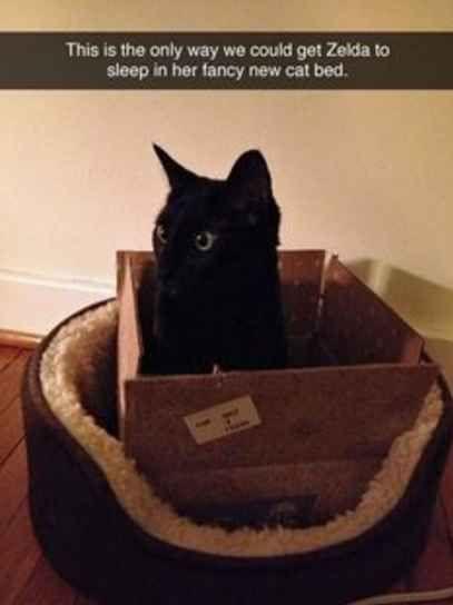 Where cats like to sleep:
