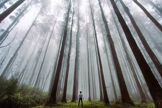 Contoh Foto Landscape Hutan Pinus Fotografi Pemula Fotografi Pemandangan Pemandangan