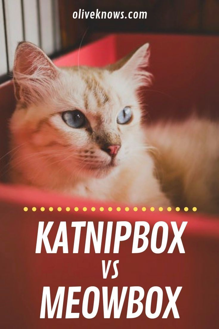 Katnipbox vs Meowbox Compared Which One You Should Opt