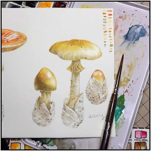 Another one!  It is really bothers me that there's too many fungus in the world and there's never enough time to draw them... #linchianing #fungus #fungi #watercolor #watercolors #watercolorpainting #yellow #draw