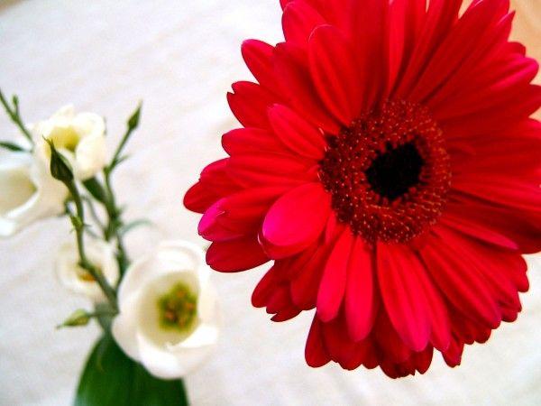 Pinterest Flower
