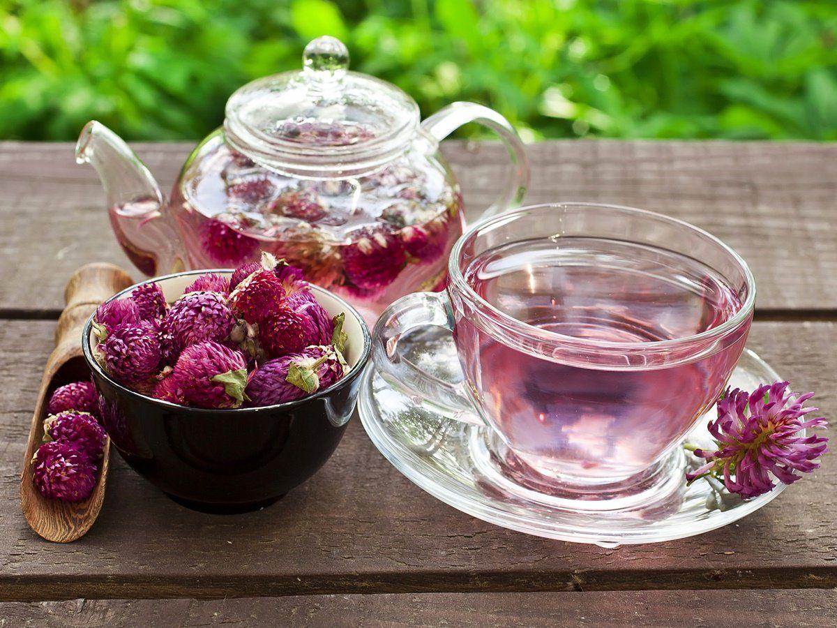 How to make red clover tea recipe lemon benefits food