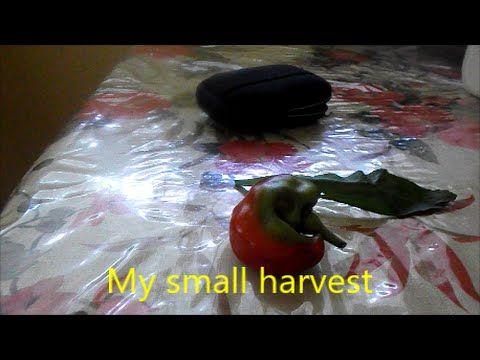 My small harvest