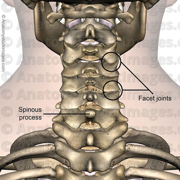 Neck Spinous Process Facet Joint Joints Processus Spinosus Cervical