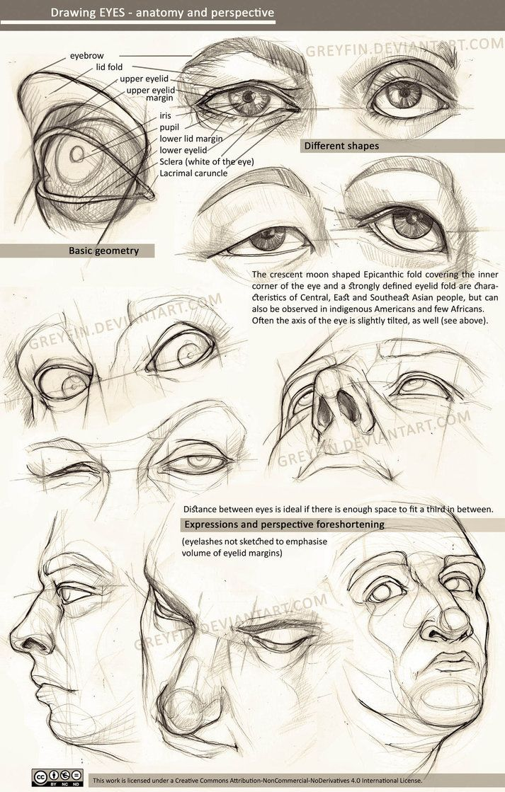 Drawing eyes - anatomy and perspective by greyfin #realisticeye