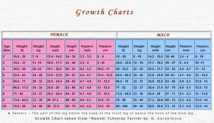 Growth Chart For The Black Russian Terrier Puppy Growth Chart