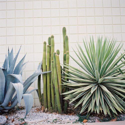 Cactuses giardino di piante grasse piantare fiori e for Completi da giardino