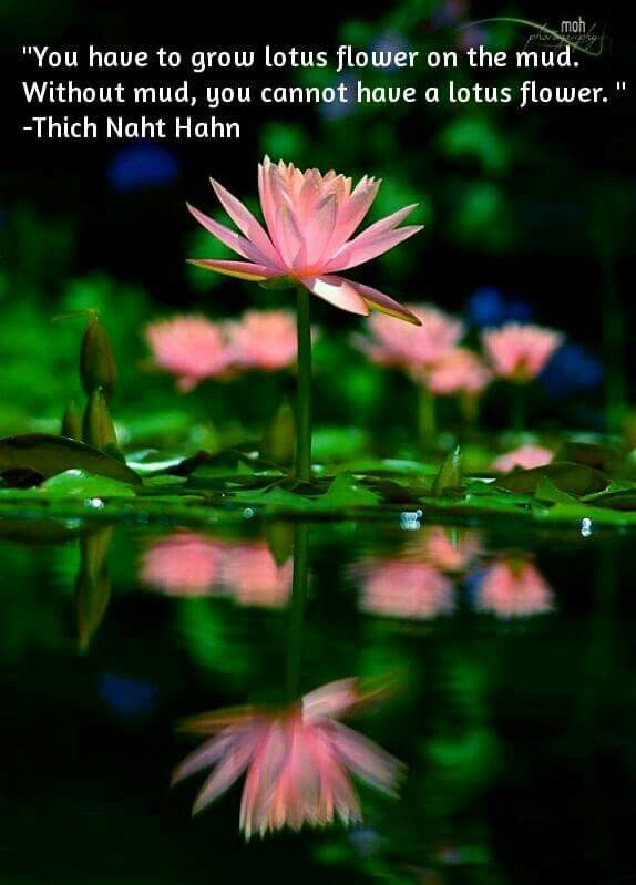 You Have To Grow Lotus Flower On The Mud Without Mud You Cannot