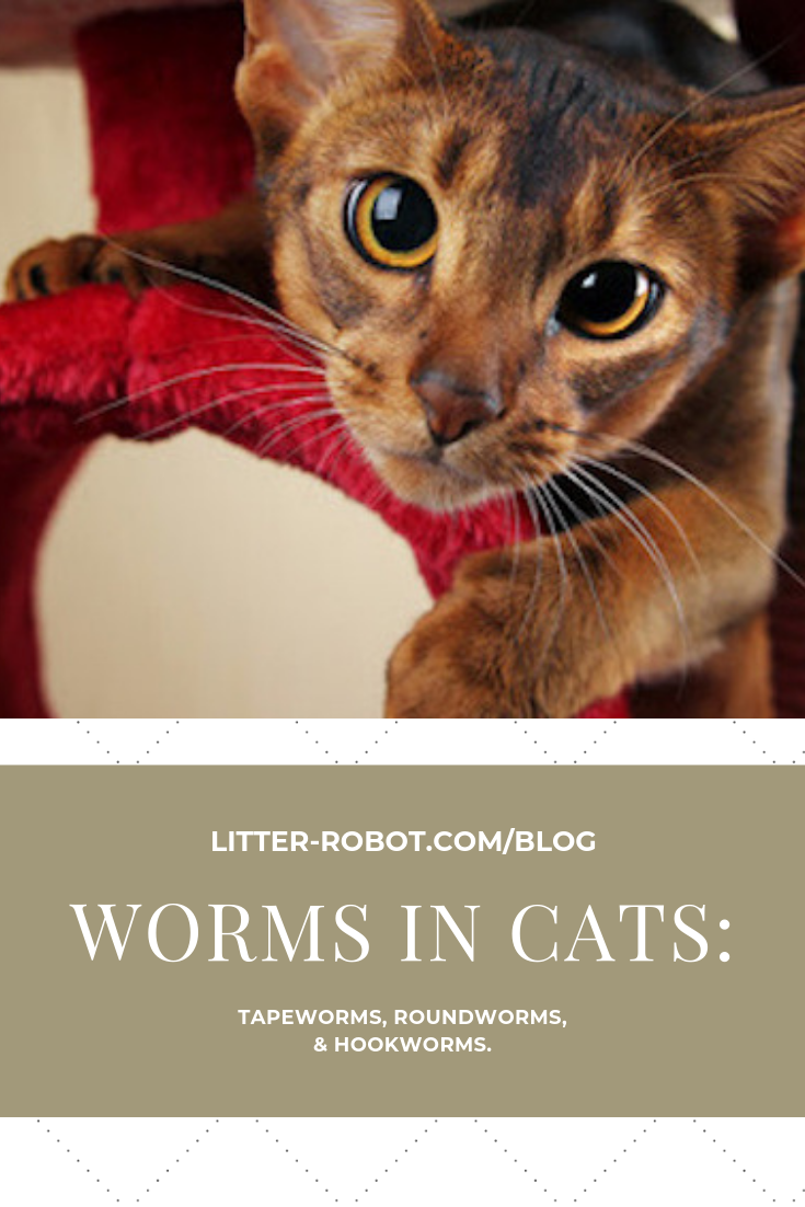 Worms In Dogs And Cats All You Need To Know About Pet Worms In 2020 Worms In Dogs Tapeworms In Dogs Dog Treatment