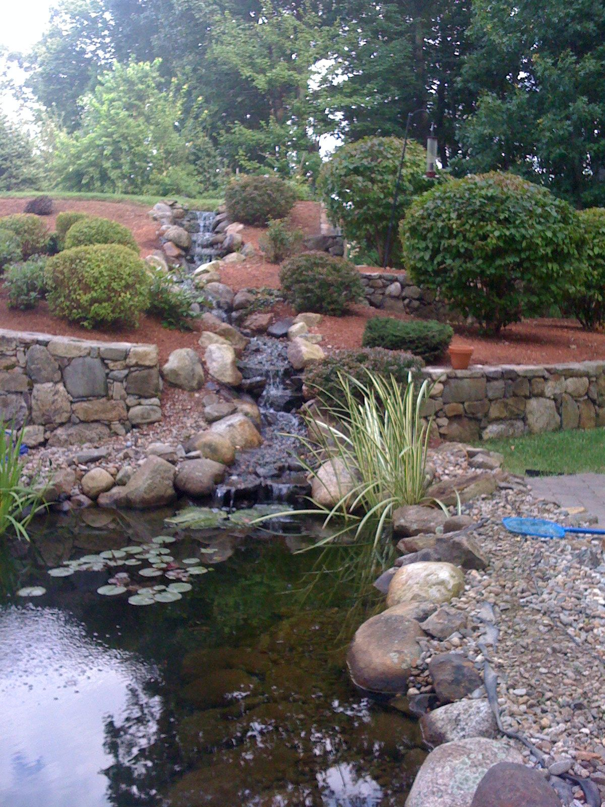Our koi pond waterfall garden pinterest for Koi pond waterfall