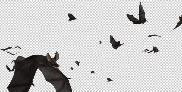 Bats Swarm Flying Around Loop By Videomagus Swarm Of Bats Scary Flying Around Screen Realistic 3d Animat Overlays Transparent Simple Background Design Bat