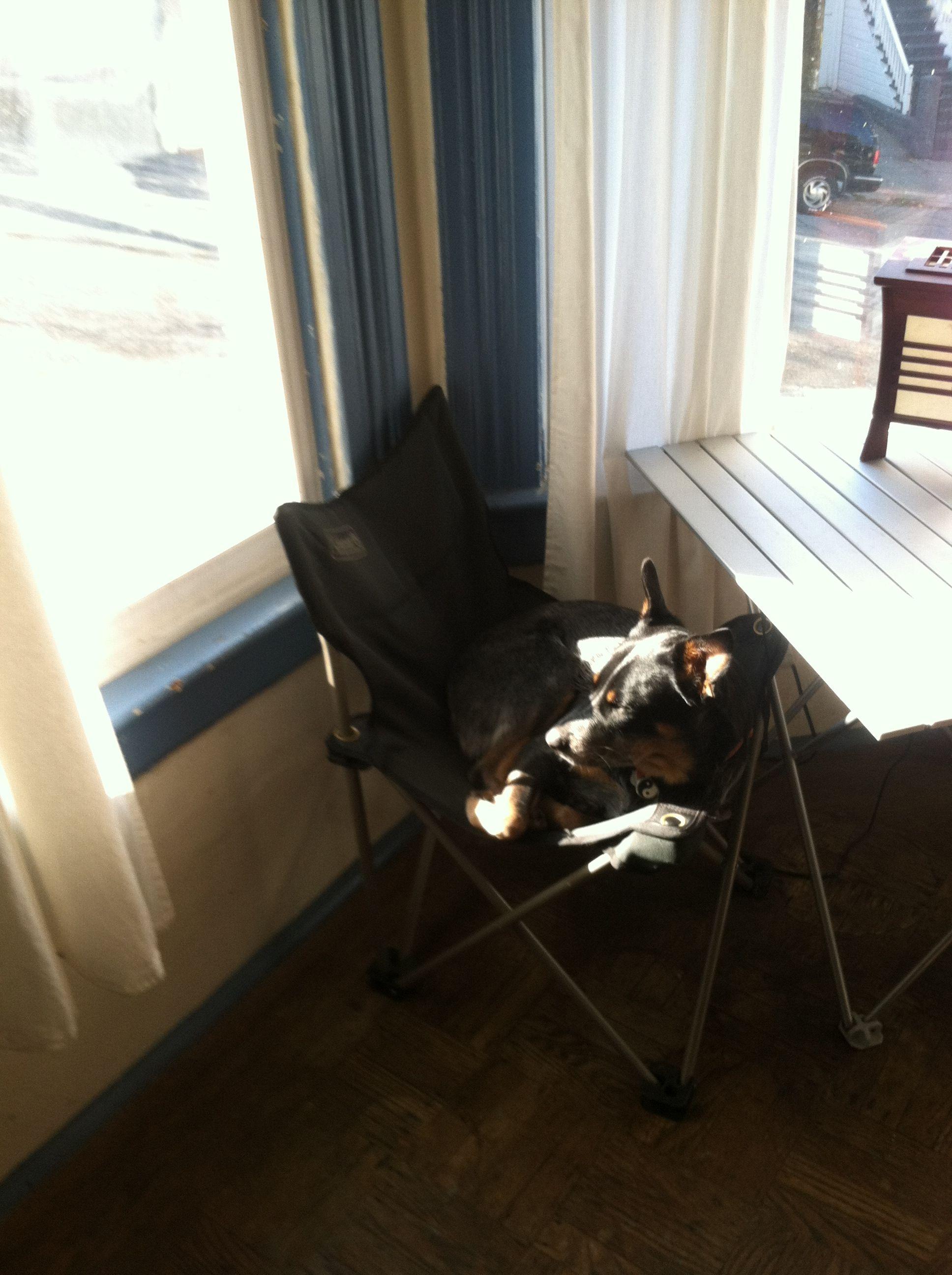 Morning sunshine in SF. Pet gear, Dog photos, Pets