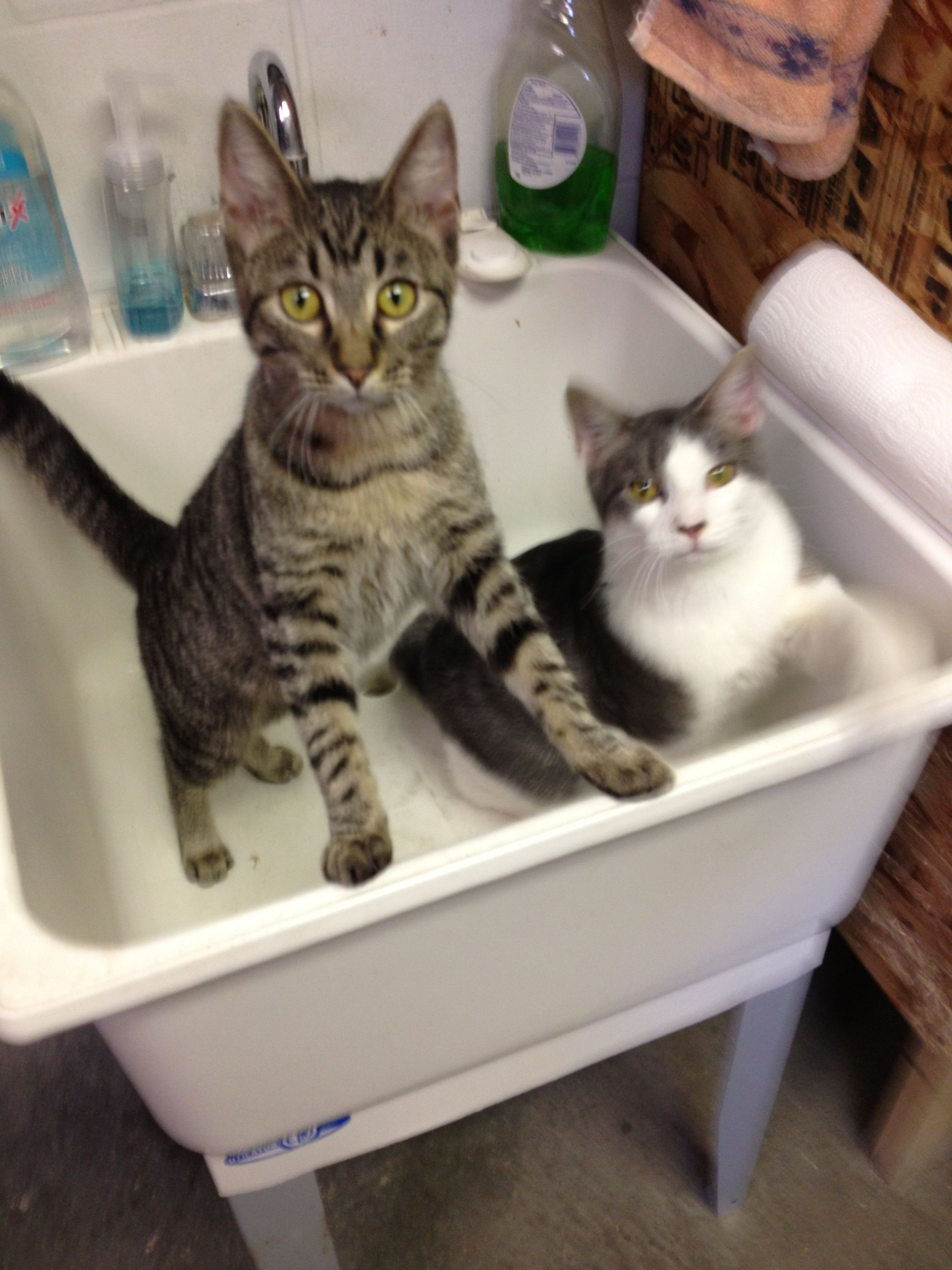 Angel and Jax helping in the Cat Room. Angel (left) is