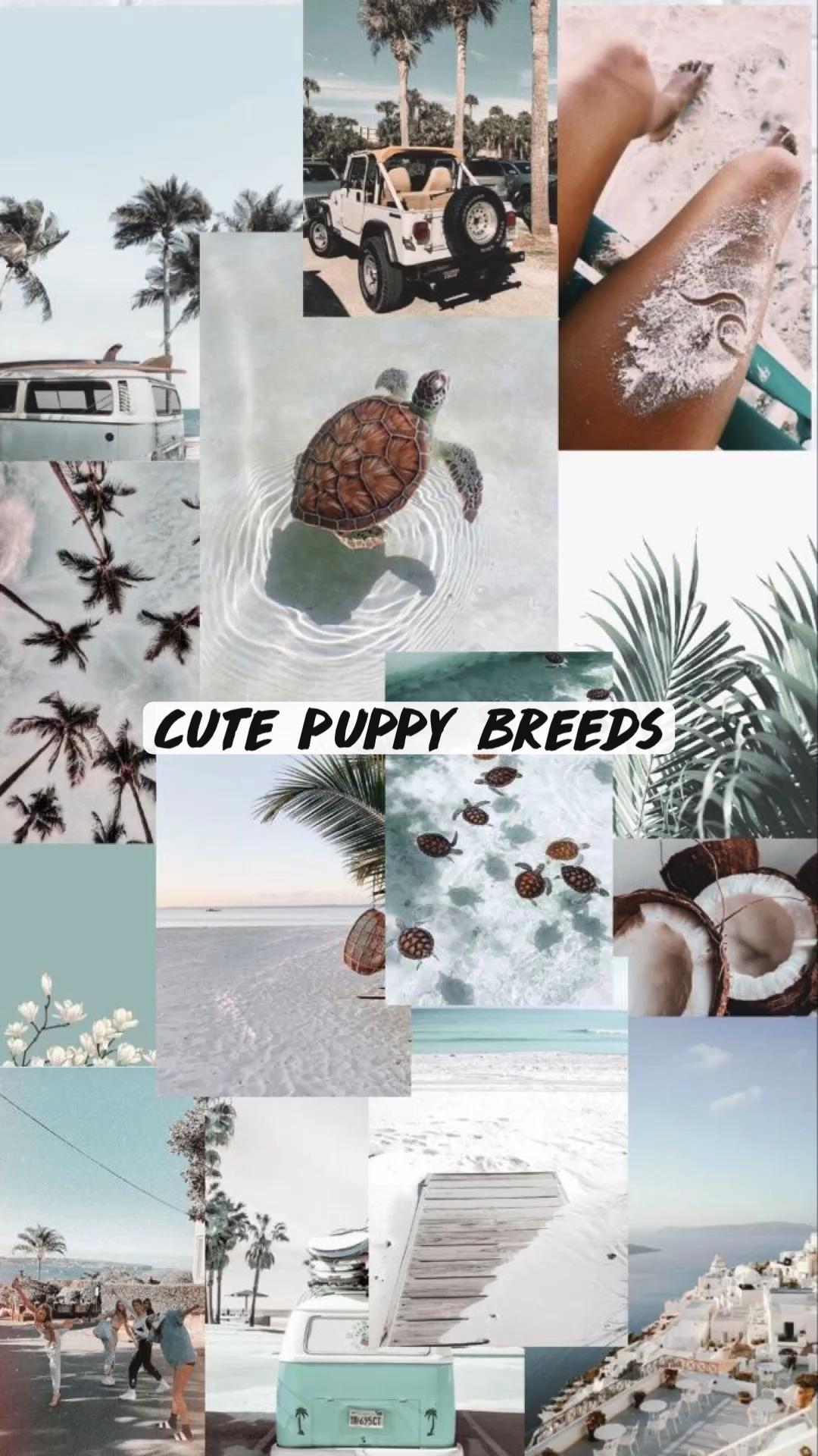 Cute puppy breeds