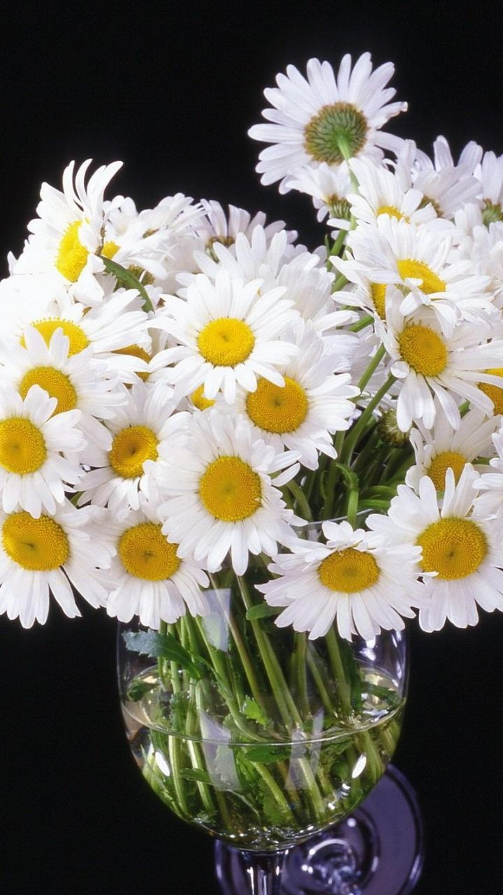 Download Wallpaper 720x1280 Daisy, Flowers, Bouquet, Vase, Black ...