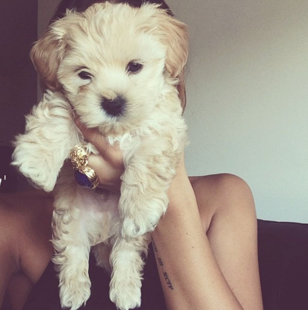 Pin By Hannah Tilley On Cute Cute Animals Animals Puppies
