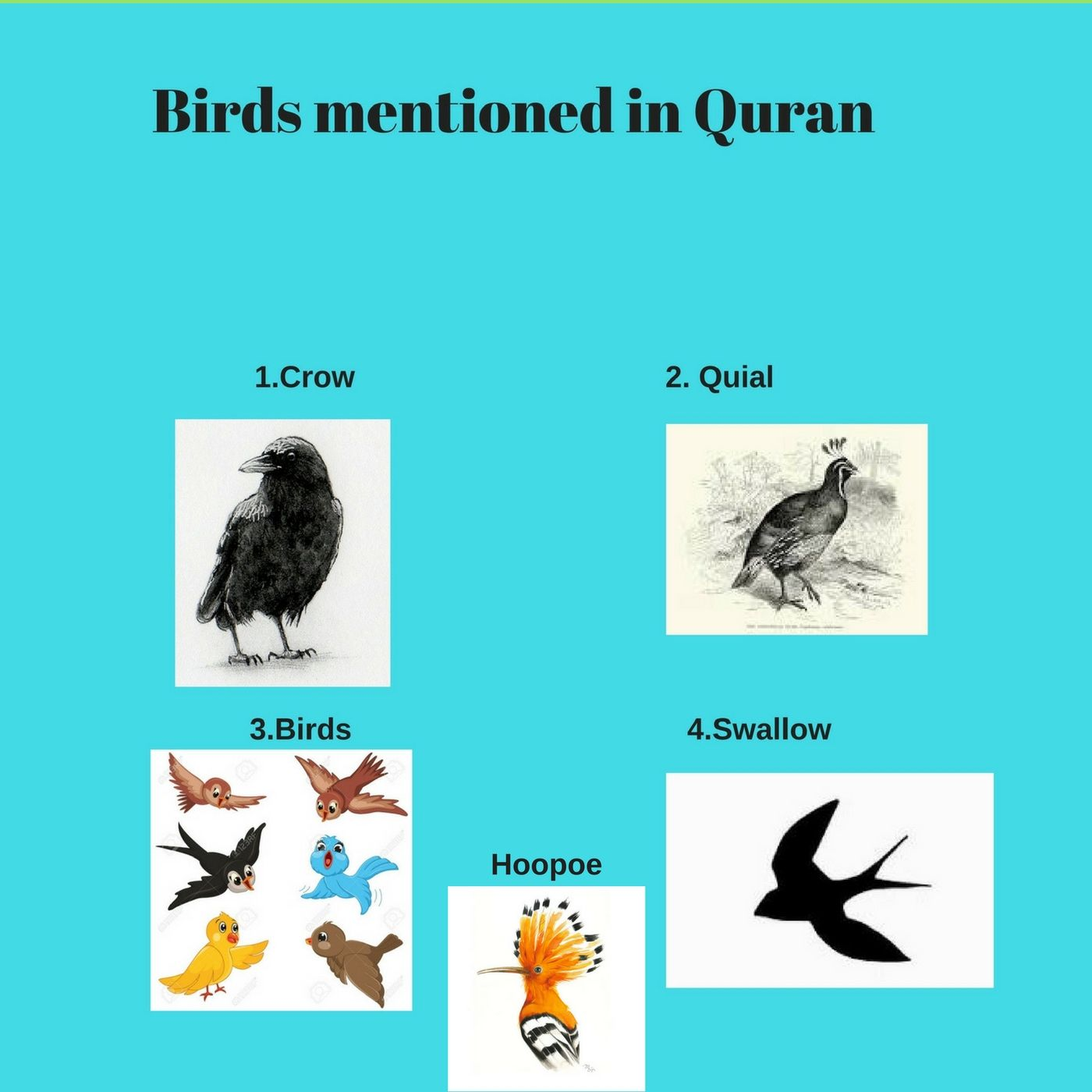 Birds Mentioned In Quran Life Cycle Of A Bird And Birds