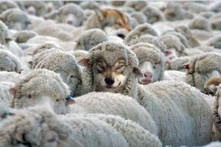 wolf in sheep's clothing - Google Search