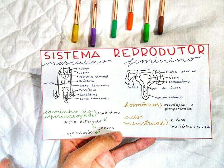 Resumo De Biologia Sistema Reprodutor Com Imagens Resumoes