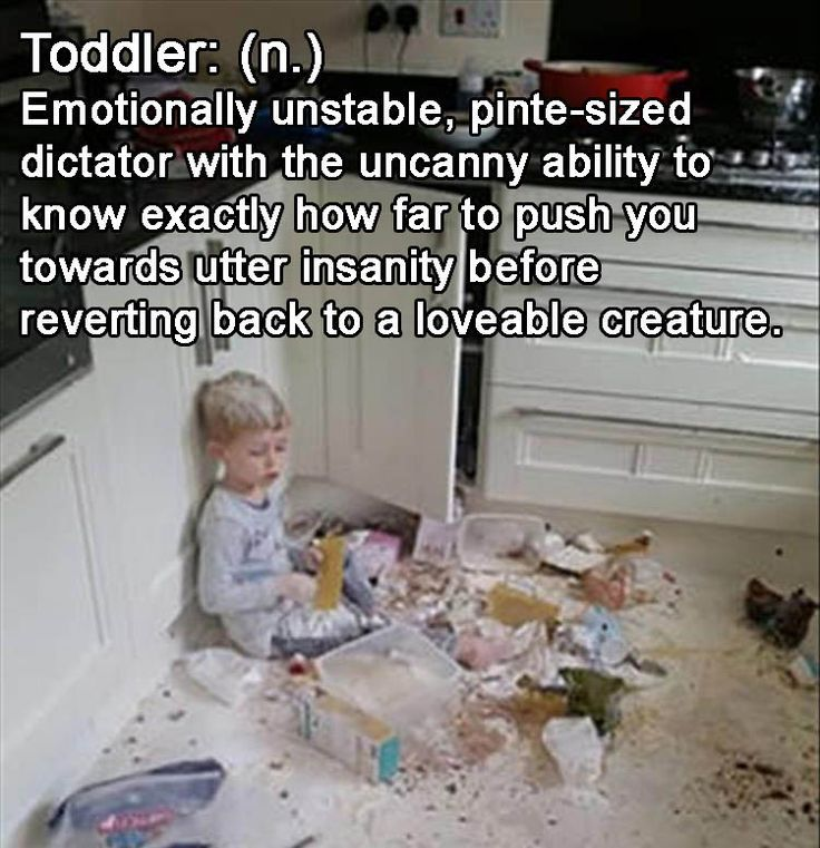 8 toddler memes that will make your pint-sized dictator seem a little more  loveable. | Mars&Stars Baby | Toddler humor, Funny pictures, Toddler quotes