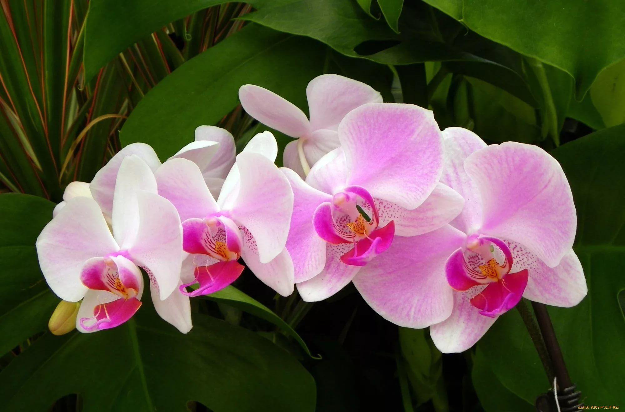 это, хотел фото орхидей с хорошим разрешением предпочитаете