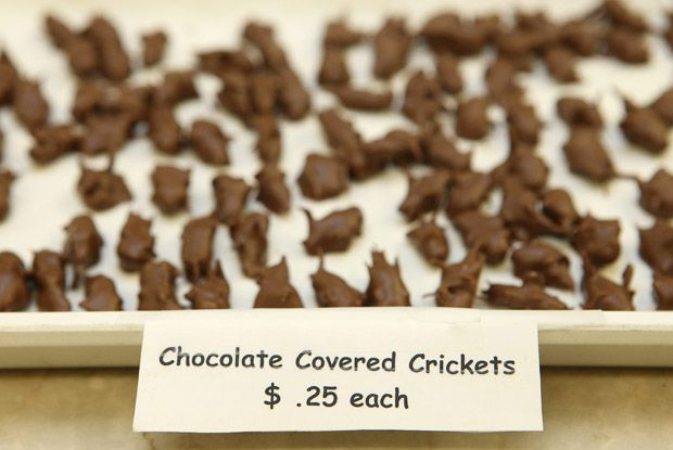 Sun 16 Dec is Chocolate Covered Anything Day giving you the chance to indulge! But would you eat one of these?  https://www.facebook.com/stratfordeast