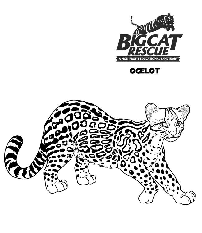 Big Cat Pictures To Color Fun Cat Coloring Page Coloring Pages