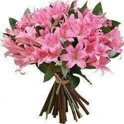 Ramo de Azáleas rosas.