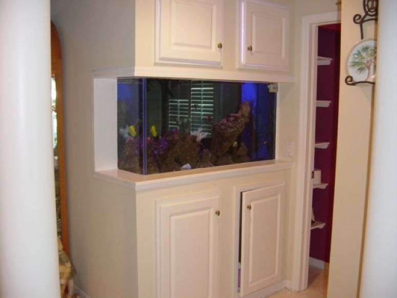 DIY Built-in fish tank- my husband built ours into a useless ... on home conservatory designs, home walkway designs, home entryway designs, home reception designs, home loft designs, home great room designs, home front designs, home staircase designs, home stairway designs, home beach designs, home wall designs, home garden designs, home dining room designs, home mud room designs, home glass designs, home floor designs, home school designs, home study designs, home building designs, home foyer designs,
