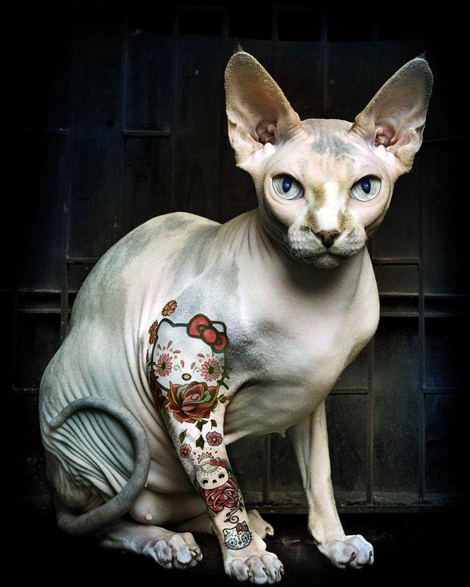 Tattooed Hello Kitty Cat Hairless Cat Sphynx Cat Oriental Shorthair Cats
