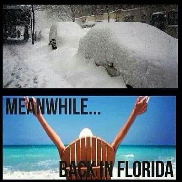 Meanwhile In Florida Florida Weather Humor Florida Funny Florida Quotes