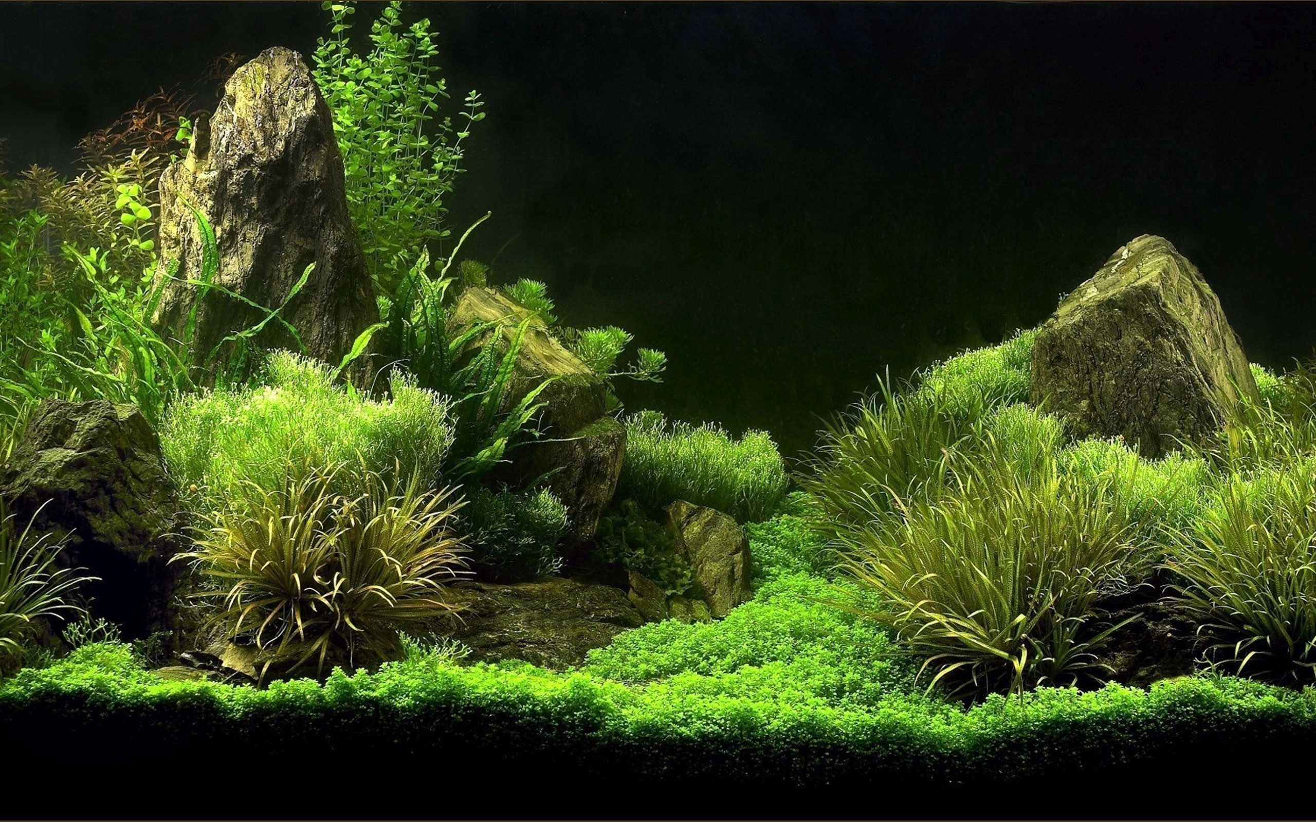 72 Aquarium Desktop Wallpapers On Wallpaperplay
