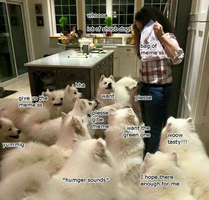 There Are Many Dogs In This House Why Are There So Many I Hope