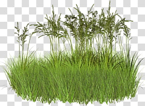 2d Grass Transparent Background Png Clipart Grass Background Grass Textures Potted Palms