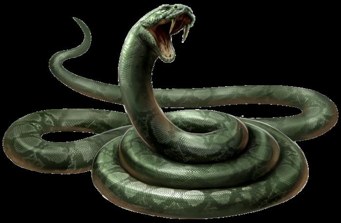 Snake Gothan Gothan City