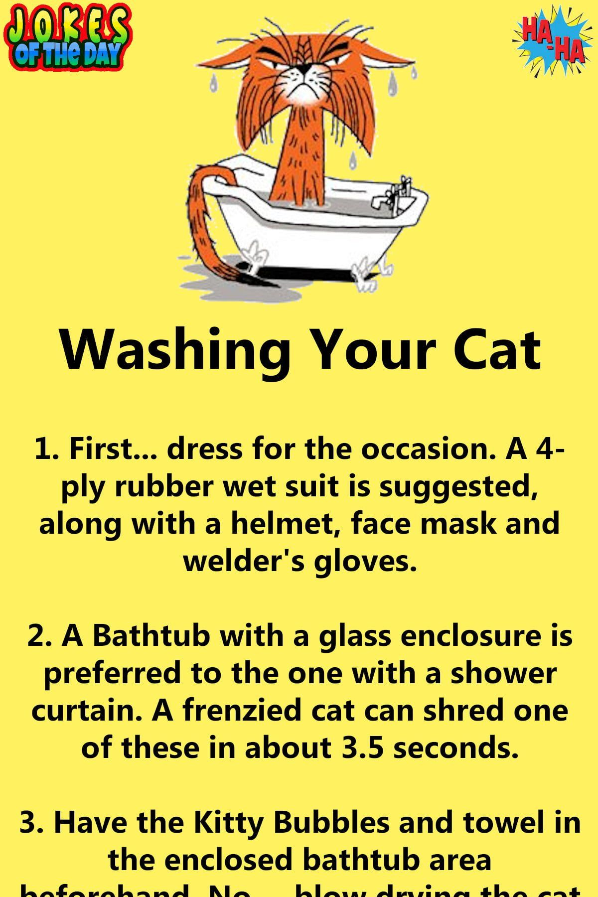 Humor How To Wash A Cat in 2020 Clean funny jokes
