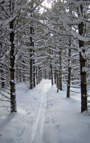 Explore Winter Trails Bu Today Boston University Ski Trails Skiing Snow Trails