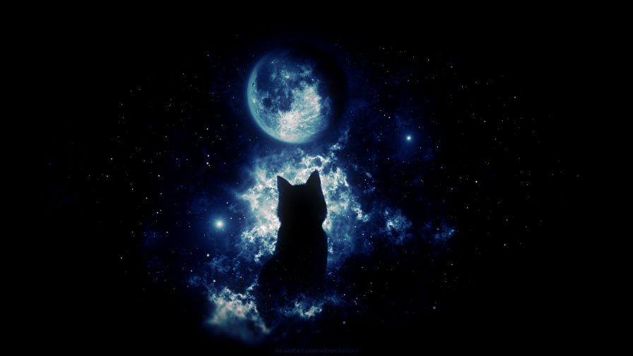 Anime Cat Staring At The Moon Hd Wallpaper Anime Cat Hd Wallpaper Anime