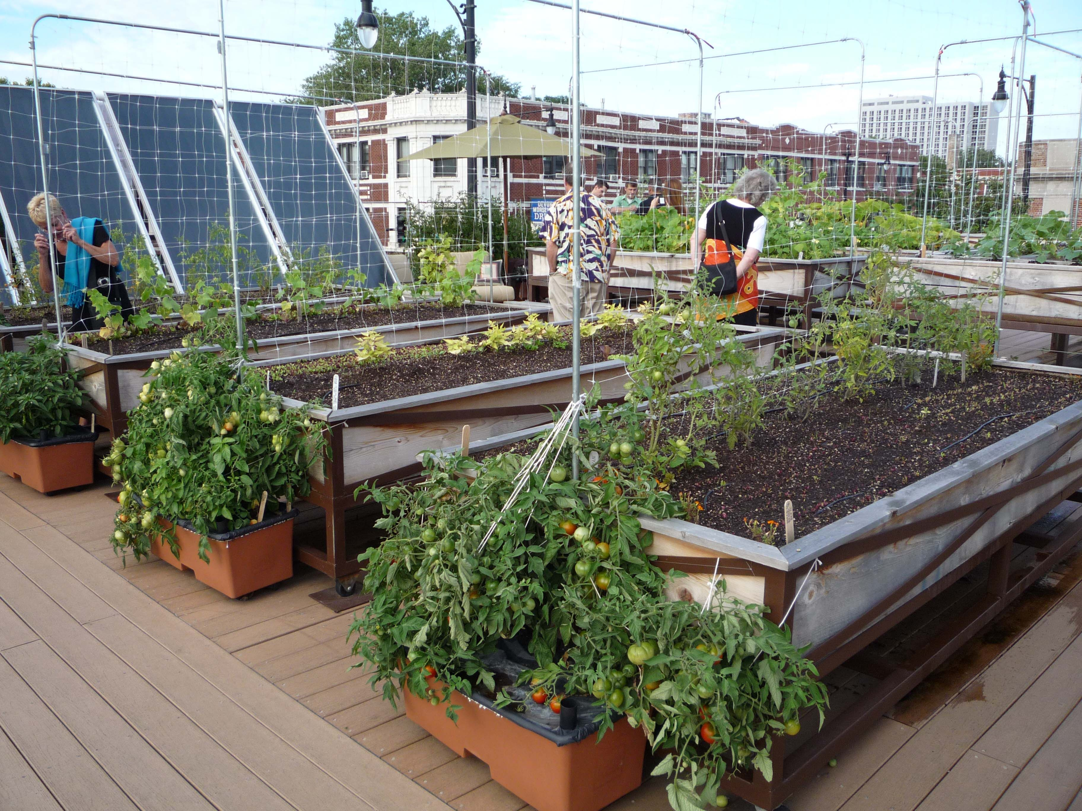 If Xzibit Pimped My Roof Vegetable garden design, Small
