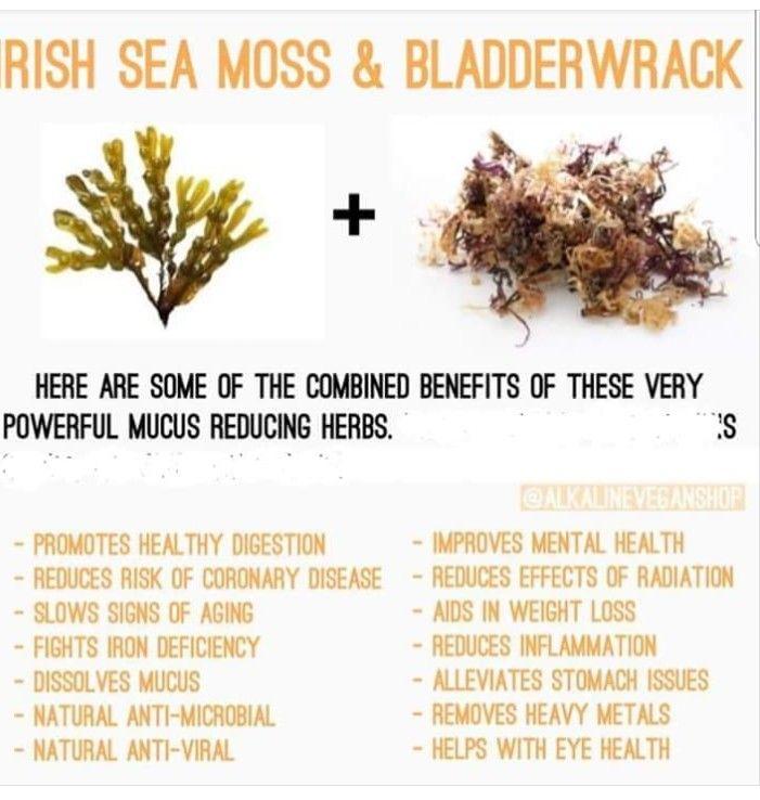 Sea Moss Bladderwack Promote Healthy Digestion Sea Moss Coconut Health Benefits