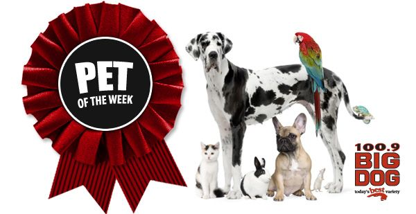 Today's Best Variety - Big Dog 100.9 :: Pet of the Week